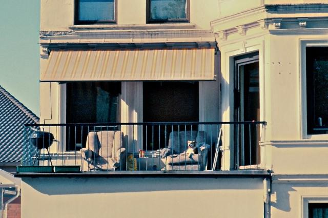 Dog on Balcony in Hamburg, Germany
