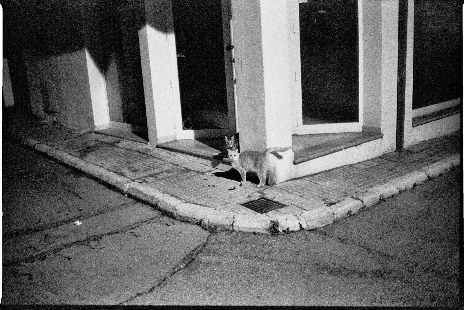 Island Cats - by Dennis Riebenstahl