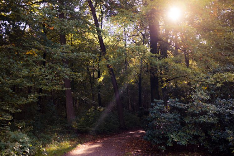 Forest #2 - by Dennis Riebenstahl
