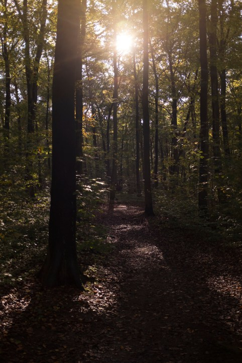 Forest #1 - by Dennis Riebenstahl