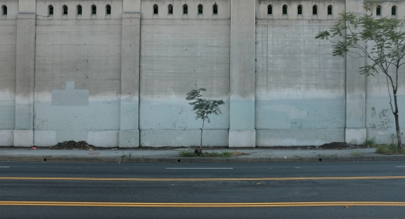 L.A. Vegetation by Dennis Riebenstahl.